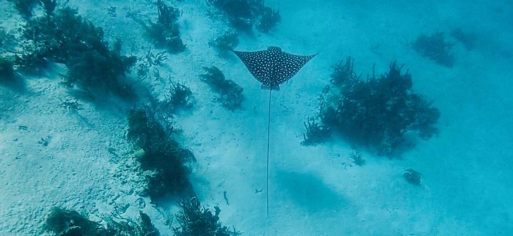 Vakantie Belize, Snorkelen of Duiken