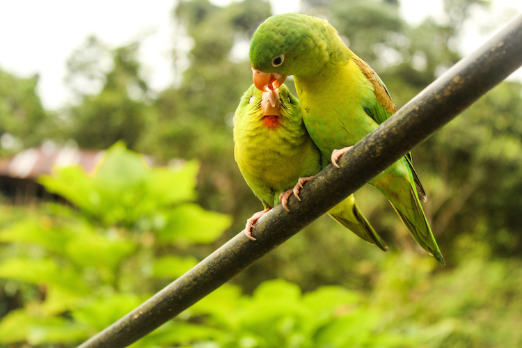 13 - backpacken cOLOMBIA foto's wildlife