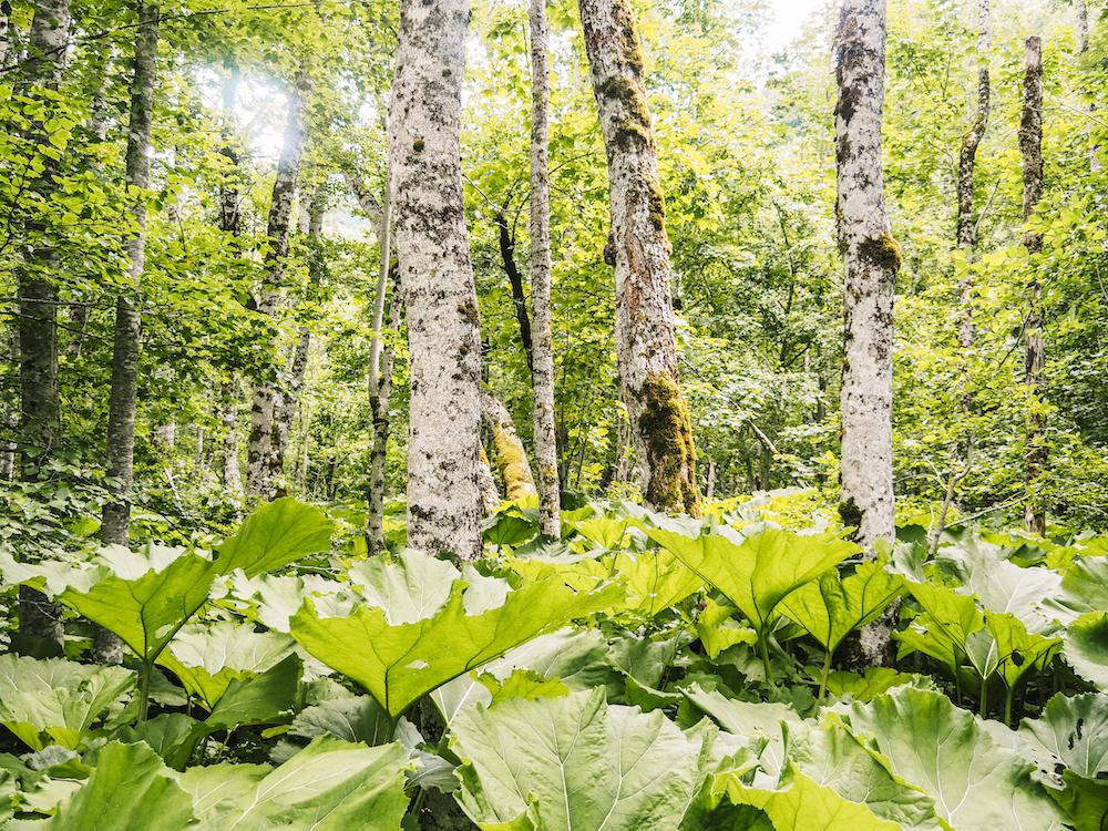 Biogradska Gora Nationaal Park in Montenegro