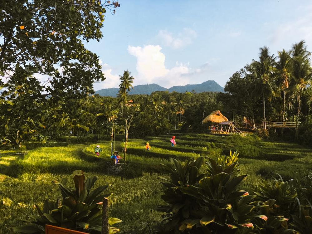3 weken Bali Rijstvelden Ubud