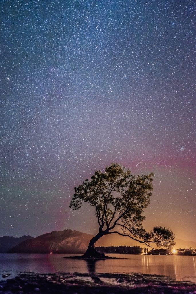 Wanaka-Tree-Nieuw-Zeeland-WeAreTravellers-Yannick-De-Pauw