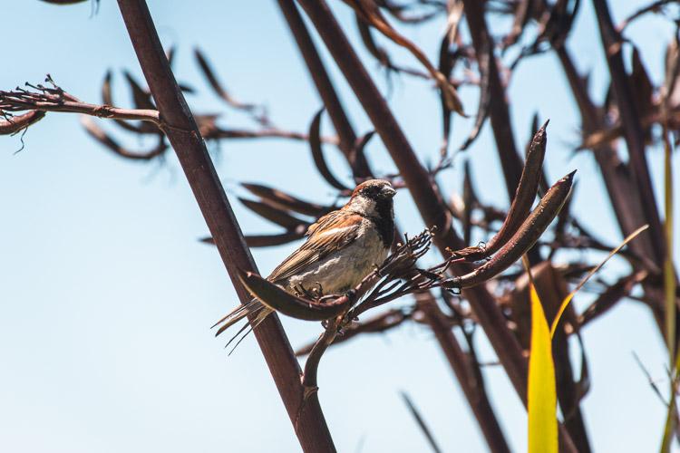 Abel Tasman National Park vogeltje