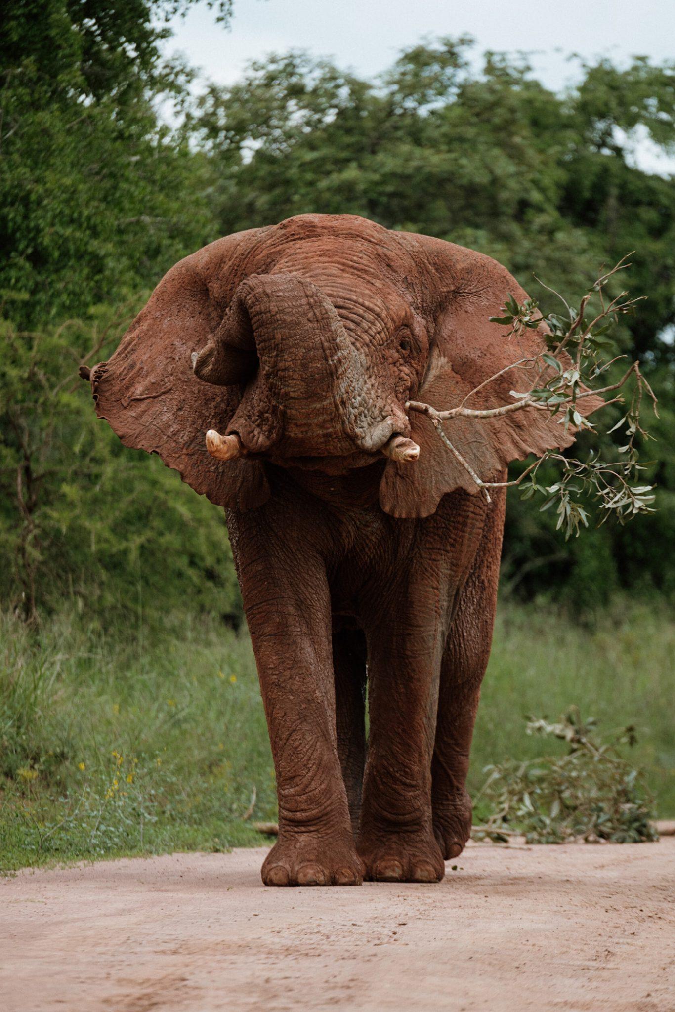Akagera National Park olifant