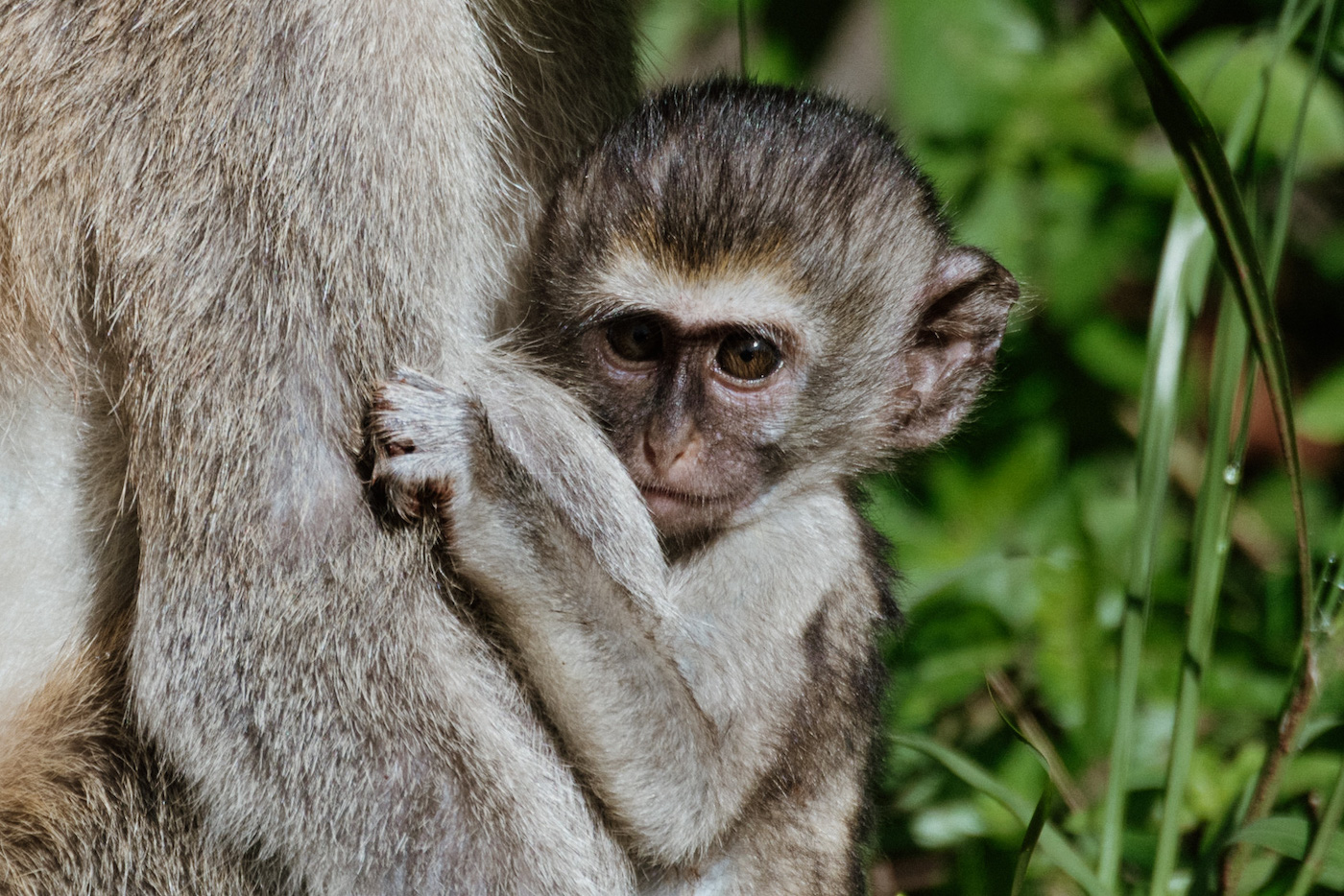 Akagera National Park rwanda reizen apen