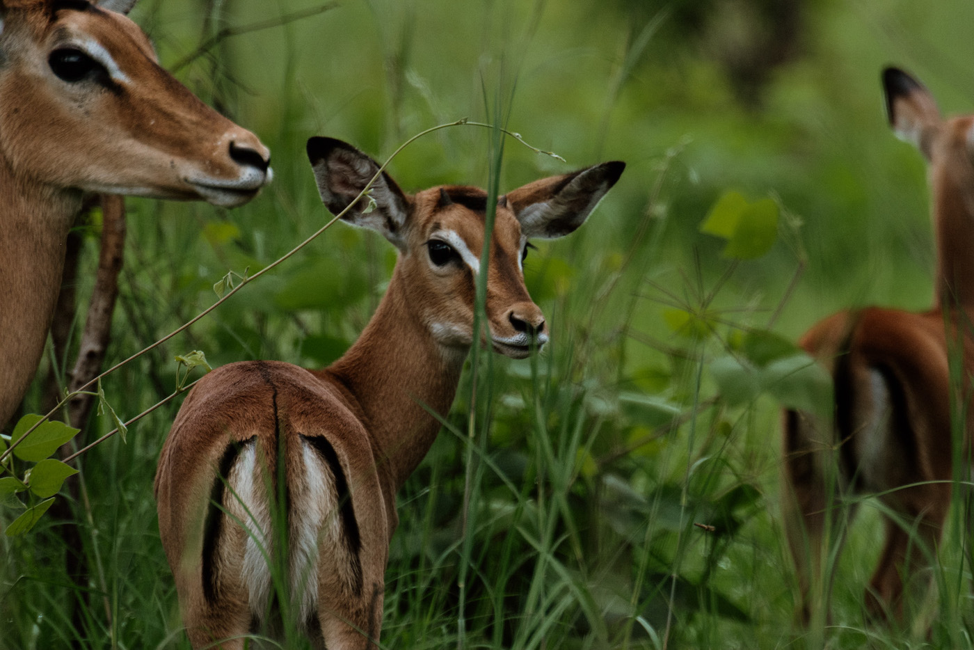 Akagera National Park safari game drive