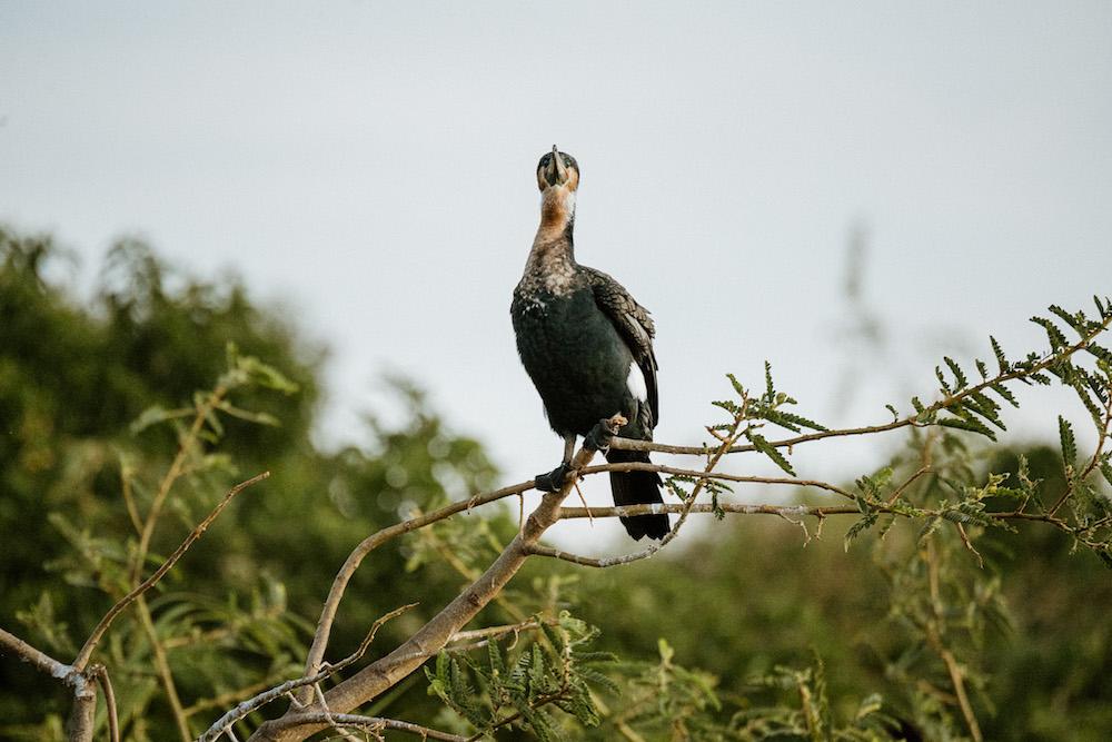 Akagera National Park vogelspotten rwanda