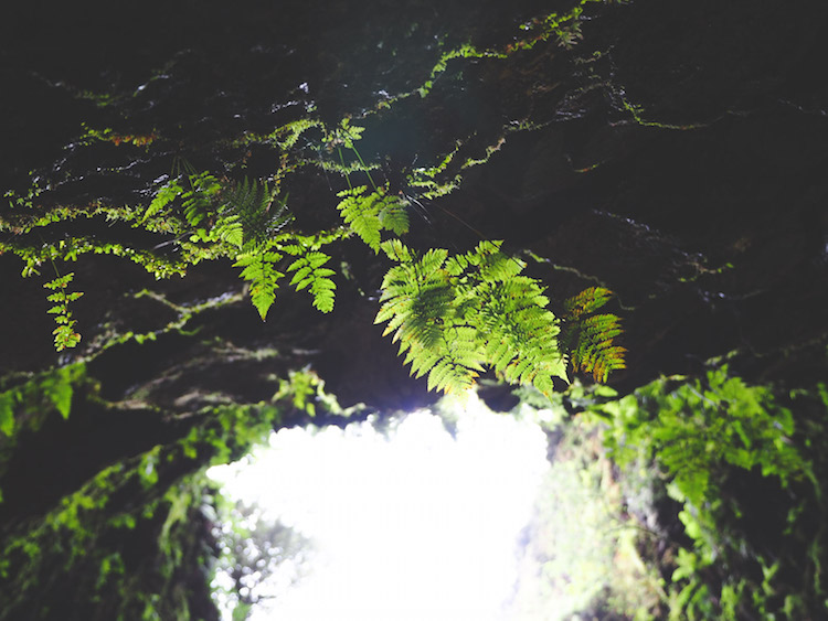 Algar do Carvao planten kraterwand terceira