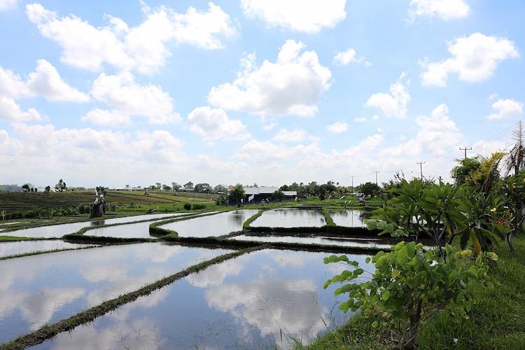 Alleen backpacken Indonesie ricefields canggu bali