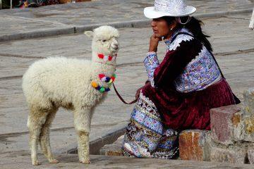 Alpaca's knuffelen peru