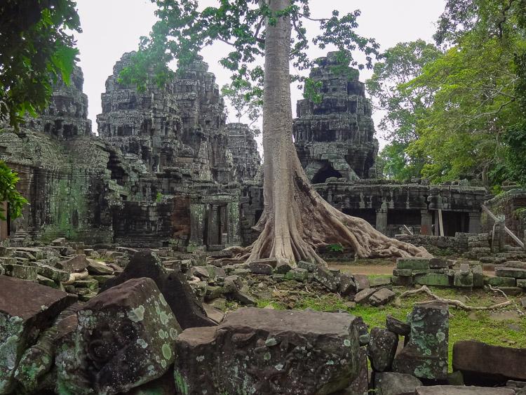 Angkor Wat ruinestad bomen details in Cambodja