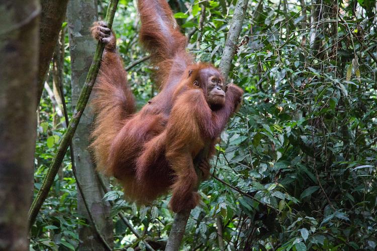 Azie orang oetangs bucketlist