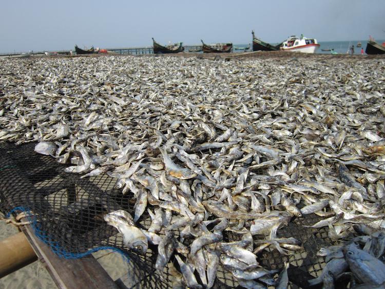 Backpacken Bangladesh vissers