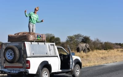 Backpacken Botswana jeepsafari
