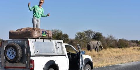 Backpacken Botswana jeepsafari