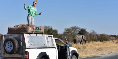 Backpacken Botswana jeepsafari olifanten