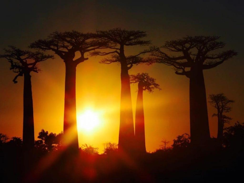 Backpacken Madagascar baobab zonsondergang