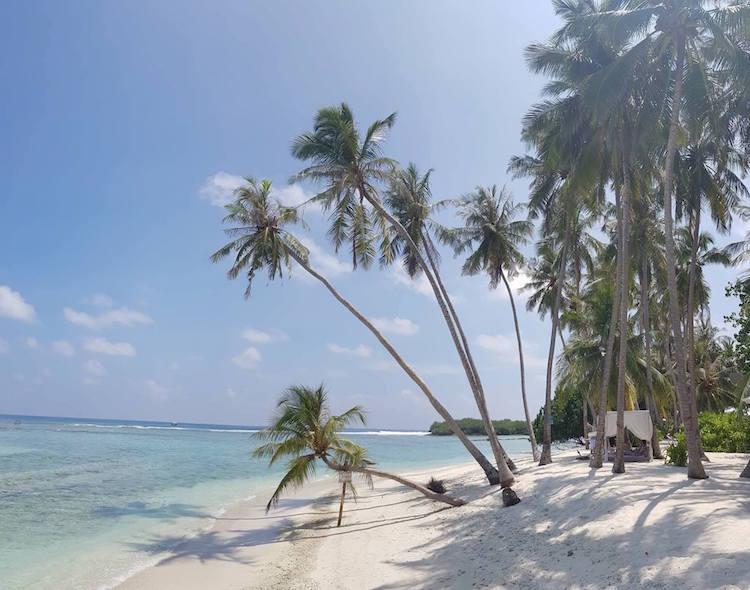 Backpacken Malediven palmbomen