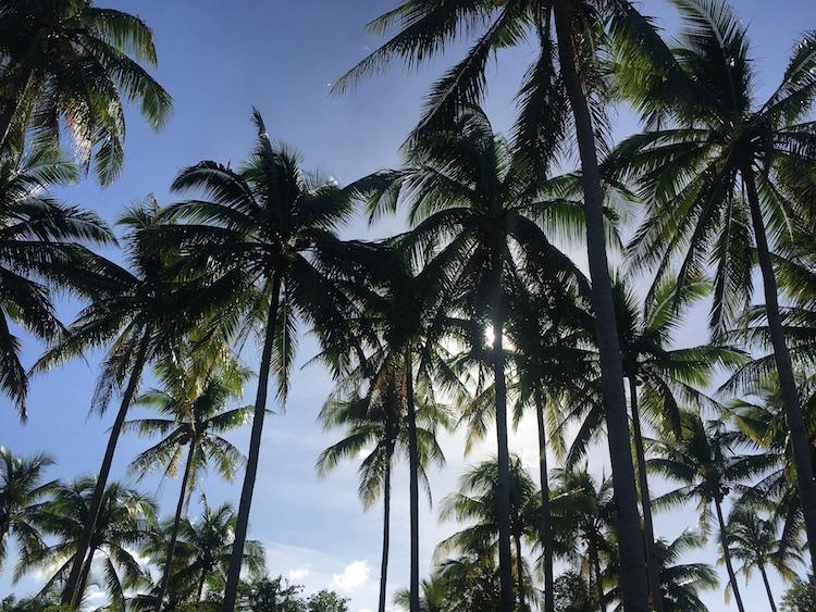 Backpacken filipijnen 1 maand route palmbomen