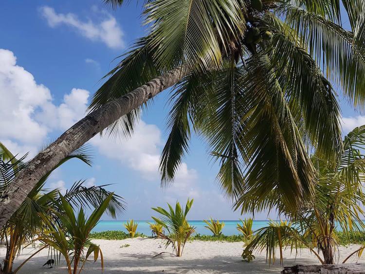 Backpacken in Malediven palmbomen strand
