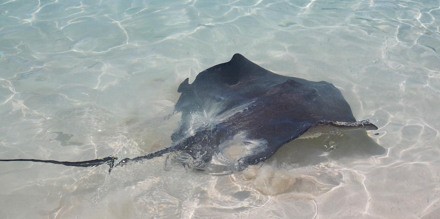 Bahamas rog