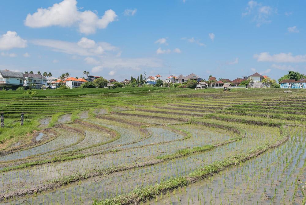 Bali rijstvelden