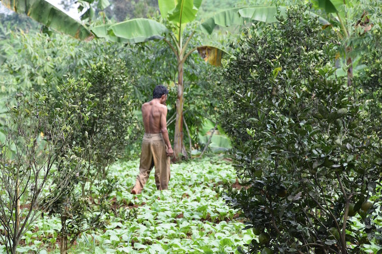 Bandung jungle Indonesie Punclut