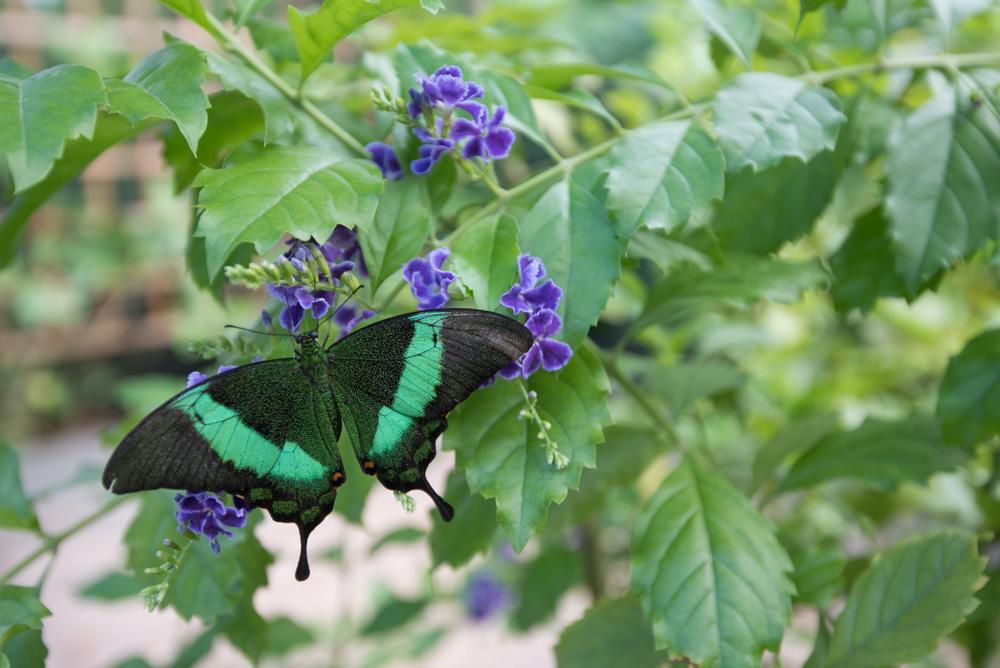 Bezienswaardigheden Aruba vakantie tips vlindertuin