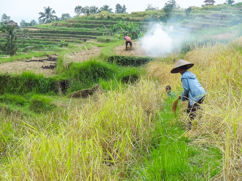 Bezienswaardigheden Bali rijstvelden