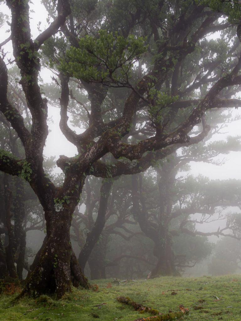 Bezienswaardigheden Madeira Fanal