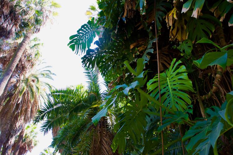 Bezienswaardigheden lissabon botanische tuin