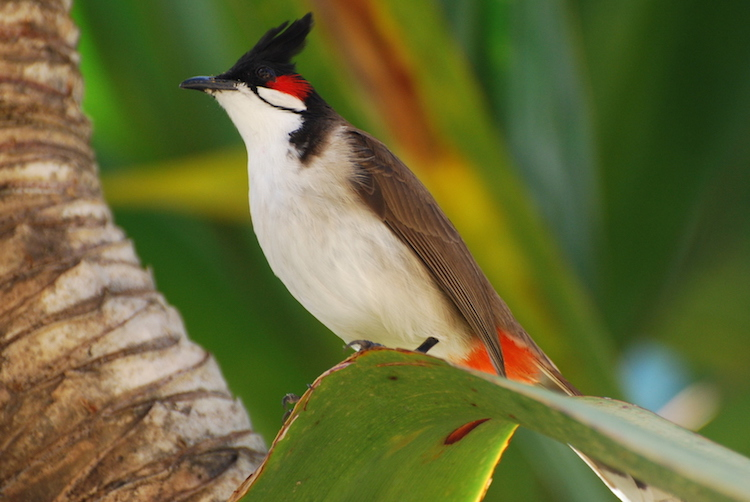 Birdwatching Madagascar eiland