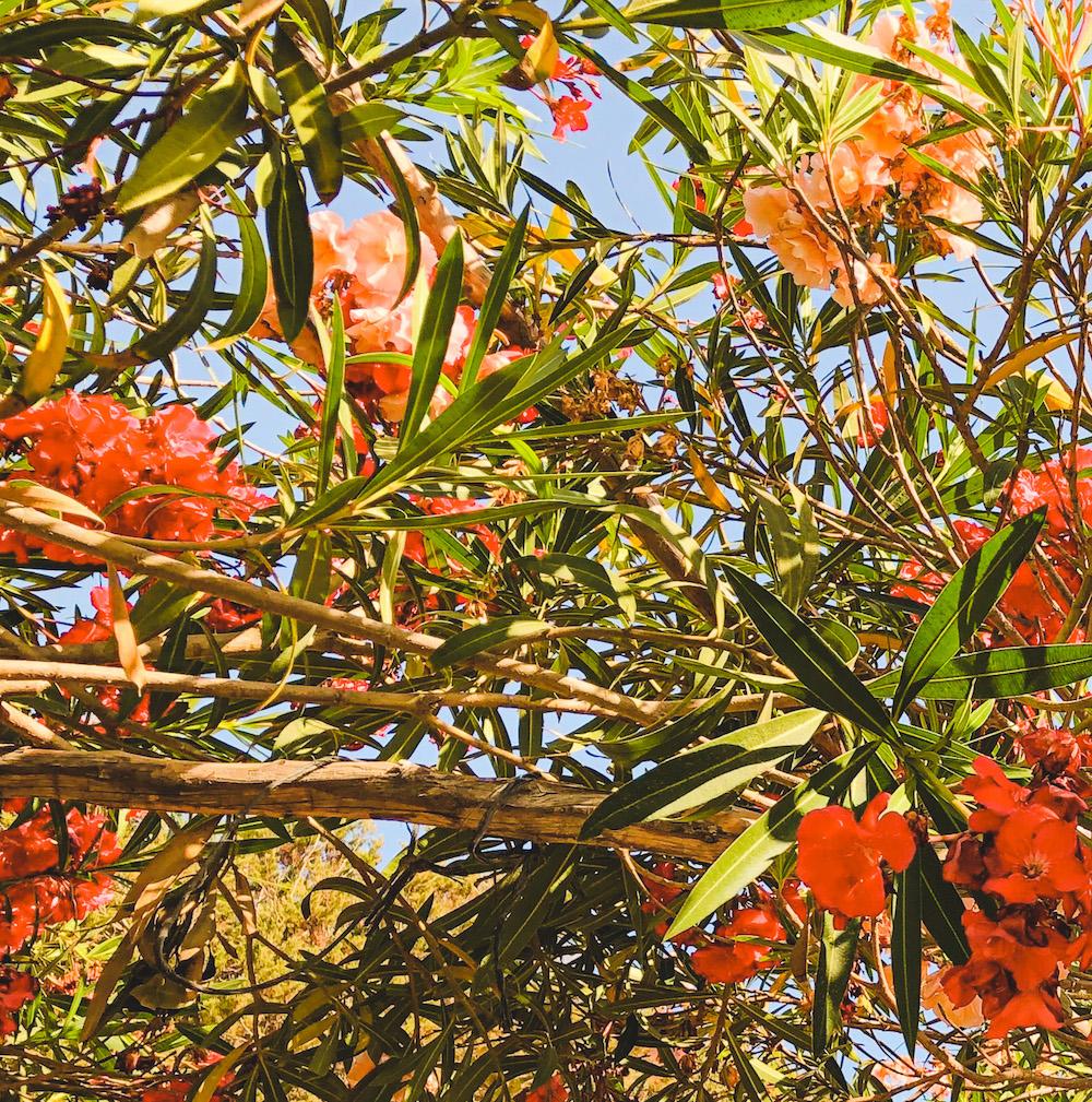 Bloemen op Ibiza