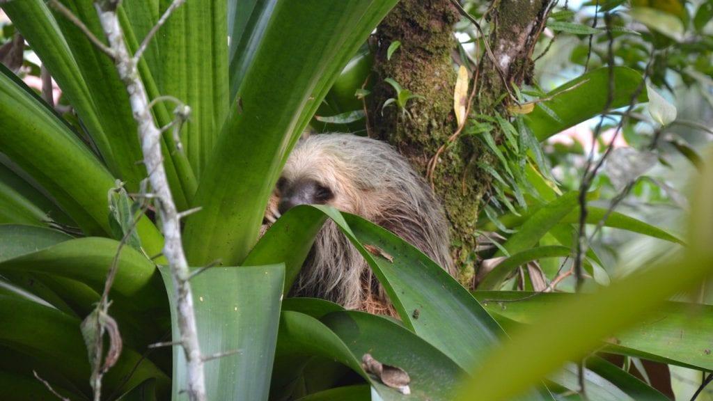 Bocas del Toro Panama luiaard