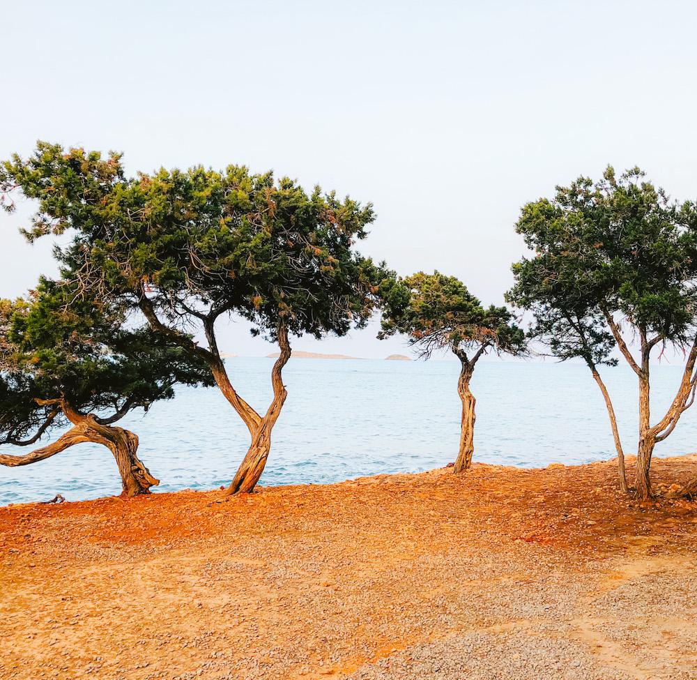 Bomen op Ibiza