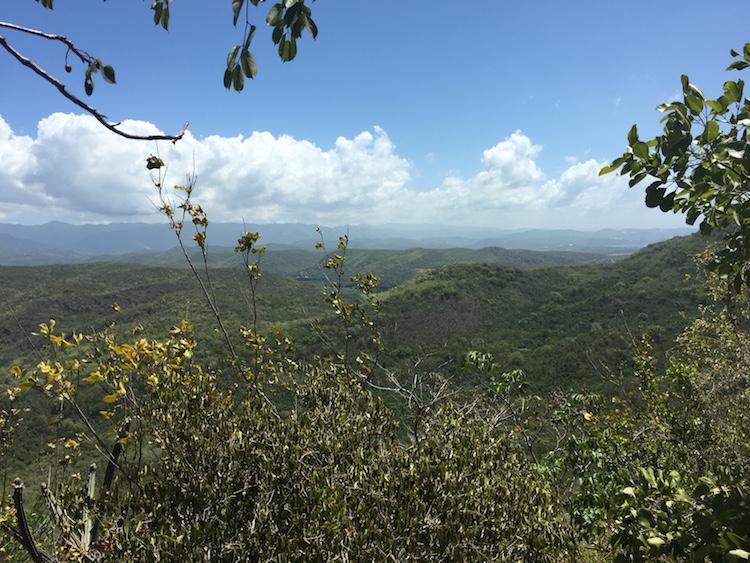 Bosque Guanica puerto rico caribbean