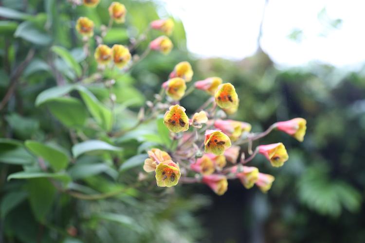 Botanische tuin in zurich