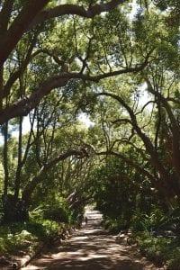 Botanische tuin kaapstad kirstenbosch-3