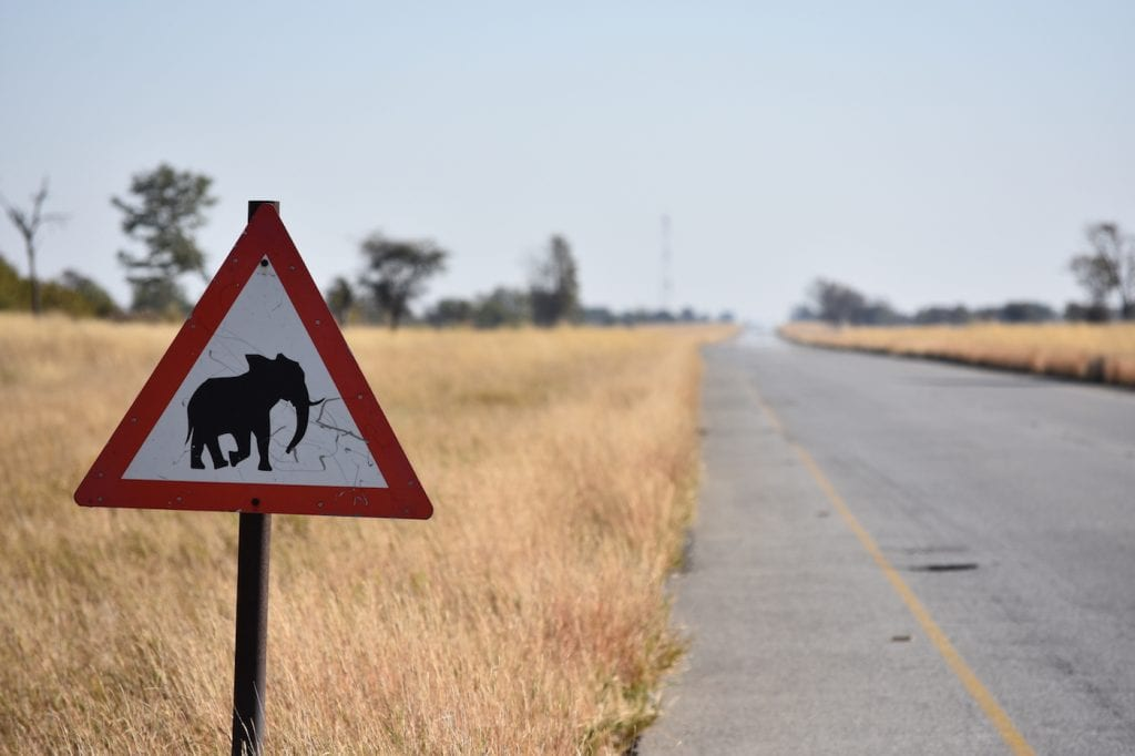 Botswana backpacken pas op voor overstekende olifnaten