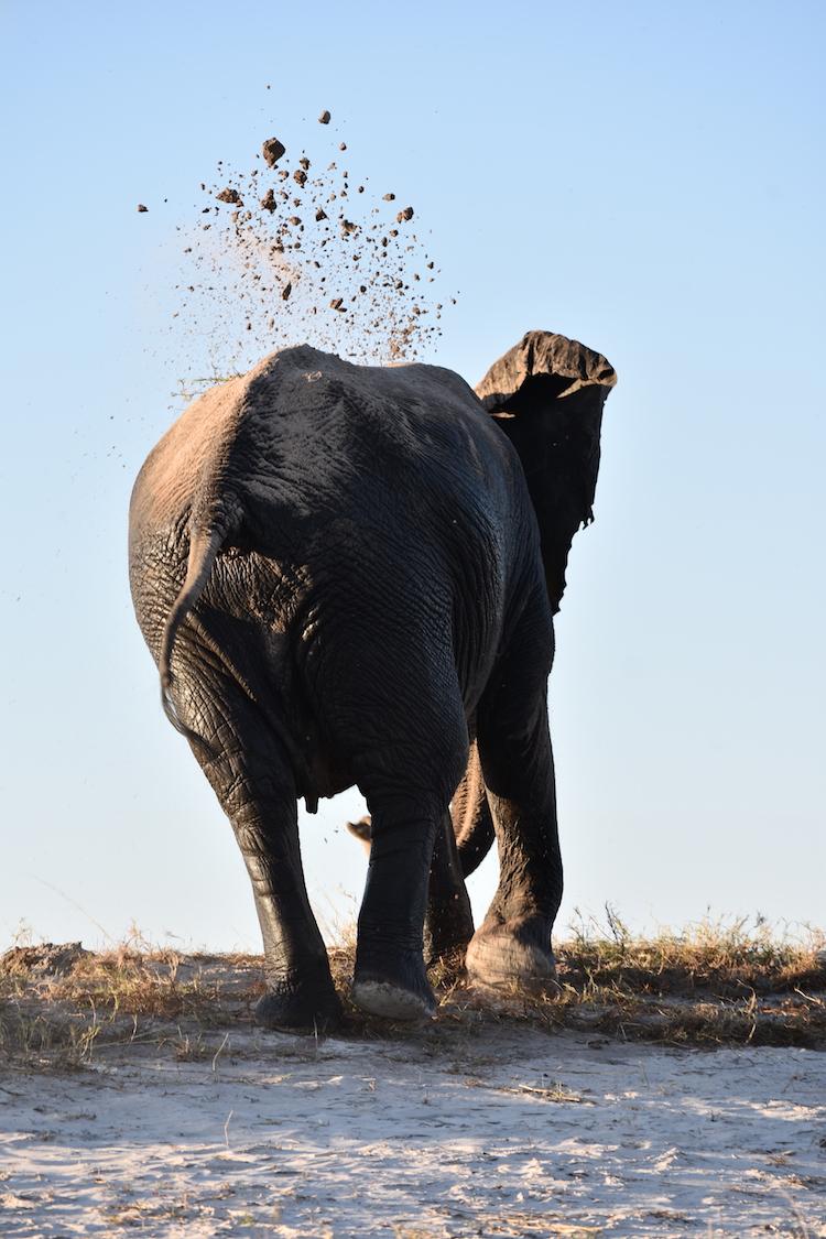Botswana zand olifant lucht