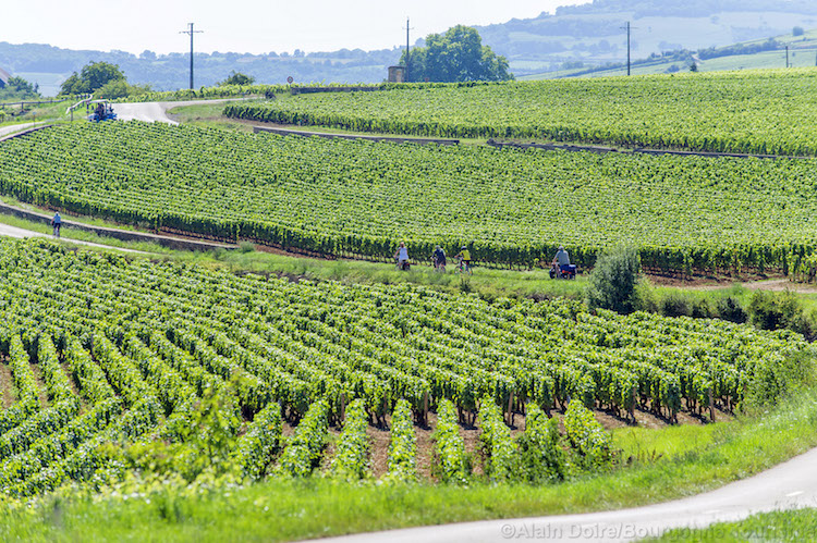 Bourgogne wijnstreek Alain Doire
