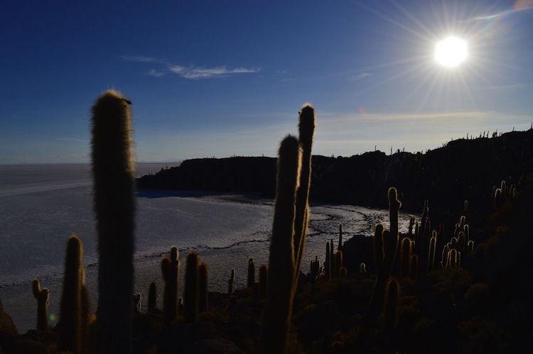 cactus-island-op-salar-de-uyuni