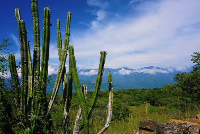 Cactus-uitzicht-colombia-El-Camino-Real