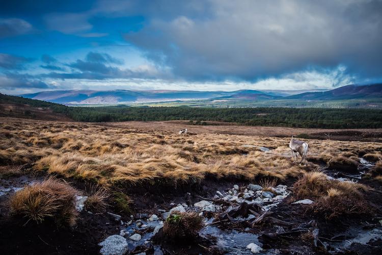 Cairngorms Nationaal Park in schotland