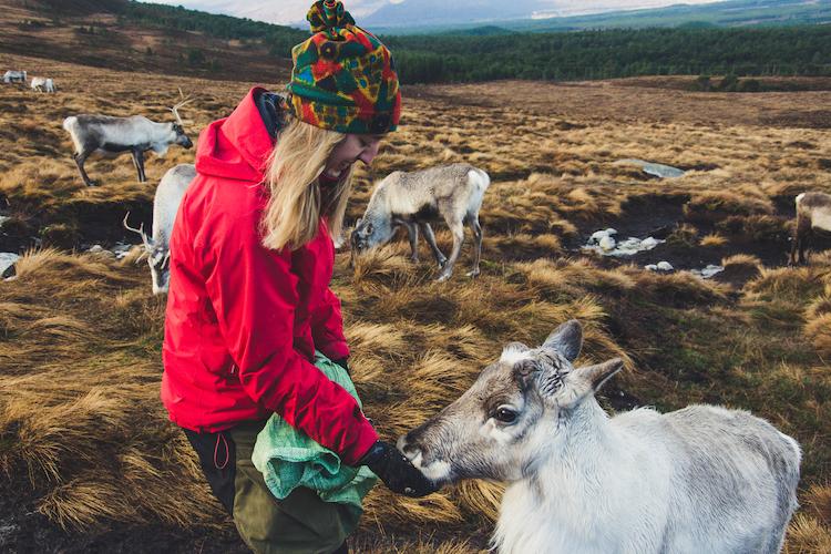 Cairngorms Schotland herder rendieren