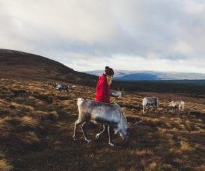 Cairngorms Schotland rendieren
