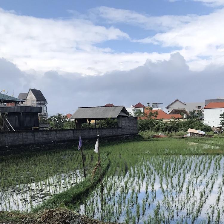 Canggu highlights rijstvelden