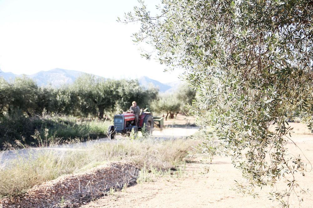 Castellon Spanje tip Millenial-olive-trees-12