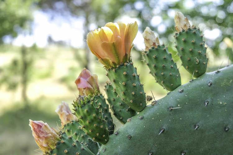 Centro de Portugal cactus natuur