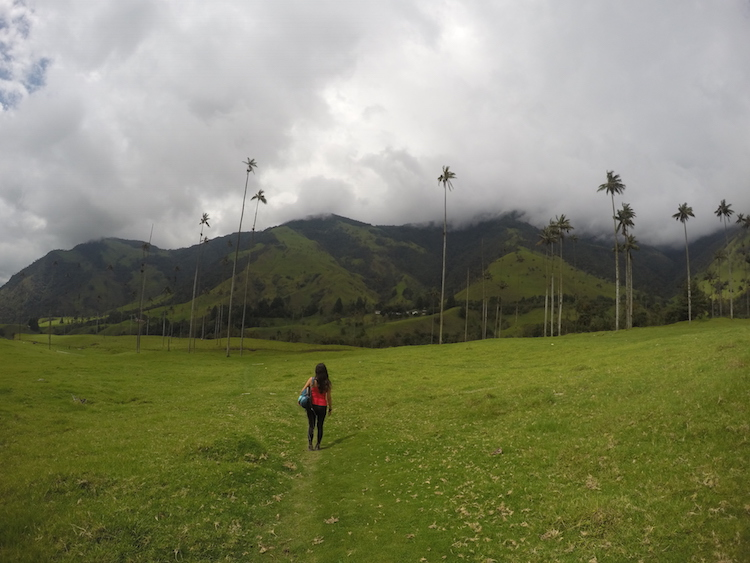 Colombia backpacken Cocora de Valley