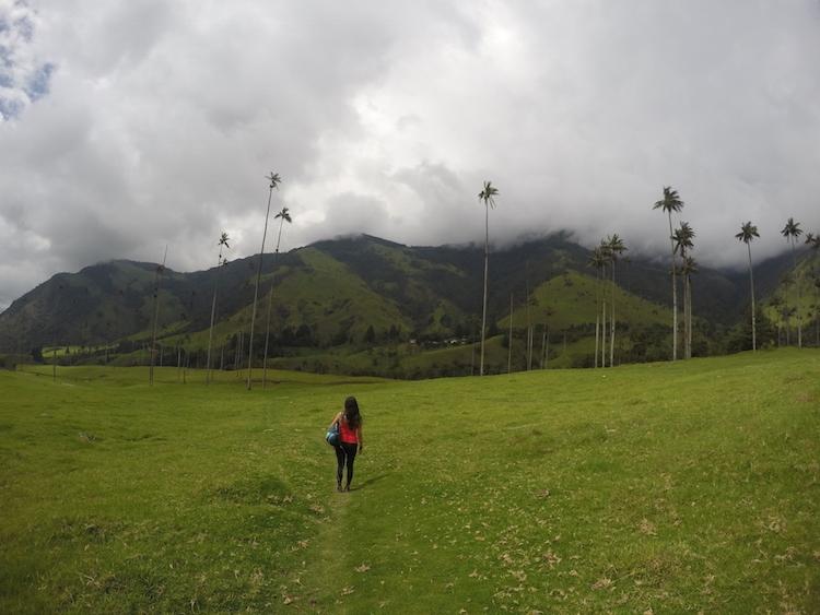 Colombia backpacken Cocora de Valley